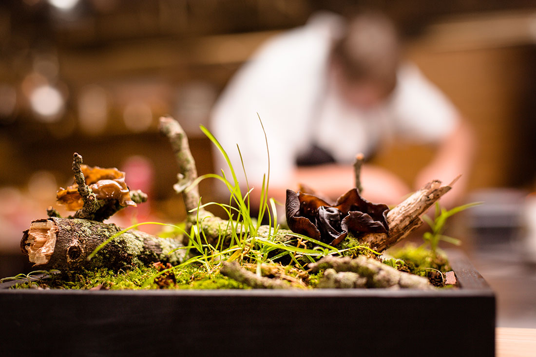 Edible New Jersey Wood Ear Mushroom Amuse