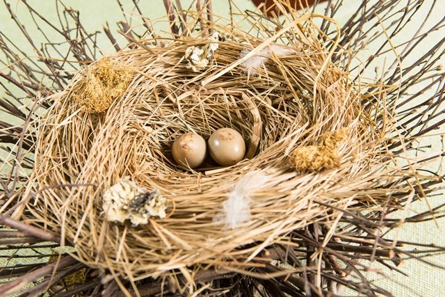 The quail eggs amuse-bouche, its eggs marinated in wine lees and then smoked, is served in a delicate nest at elements in Princeton. (Cathy Miller)